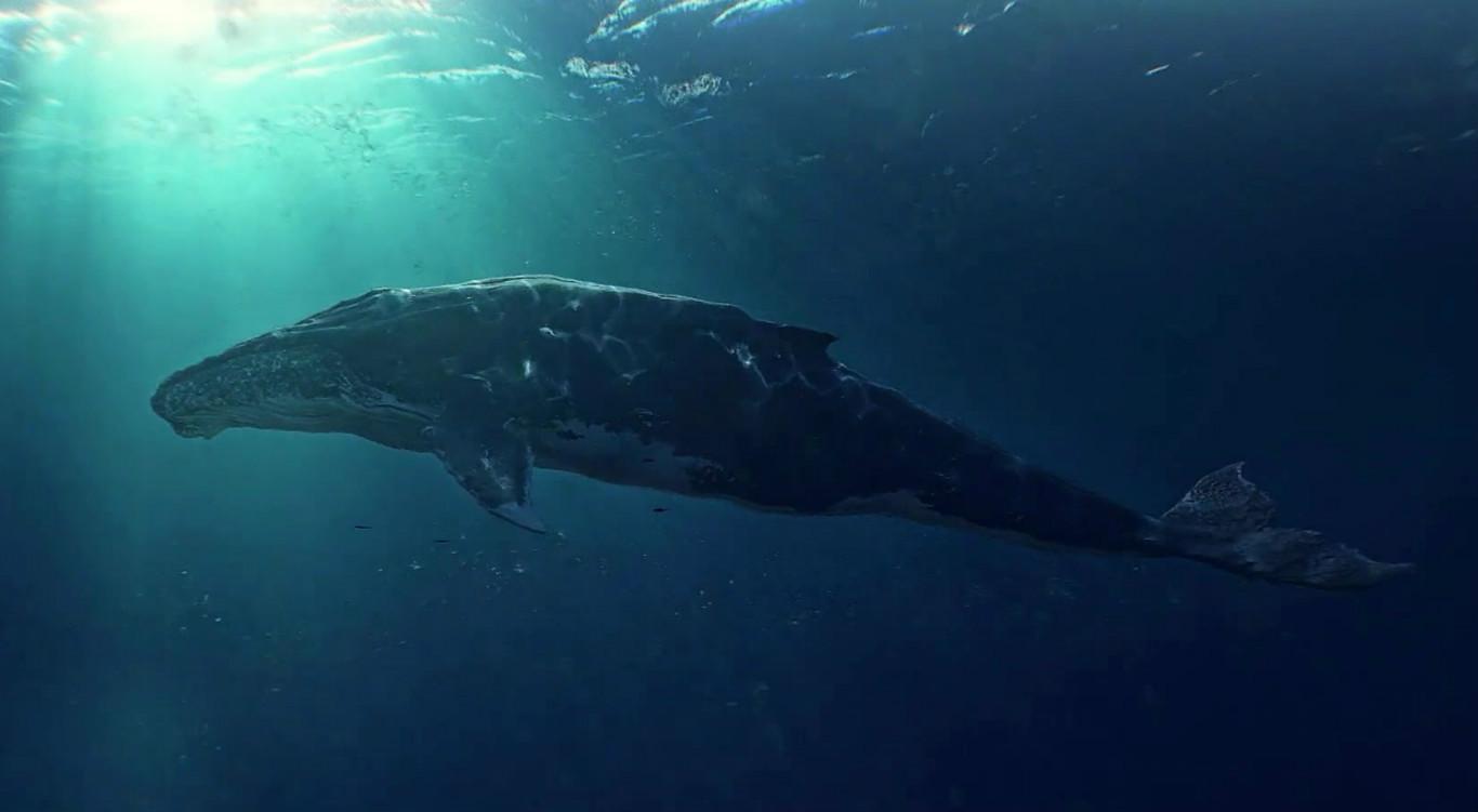 日本拟退出国际捕鲸委员会 以重启商业捕鲸-牛吧云播